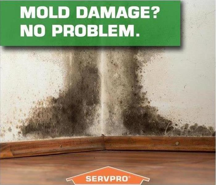 Water Damage Tips For Controlling In-Home Water Levels