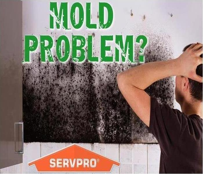 Mold Remediation Why Use Professionals When Getting Rid Of Mold?
